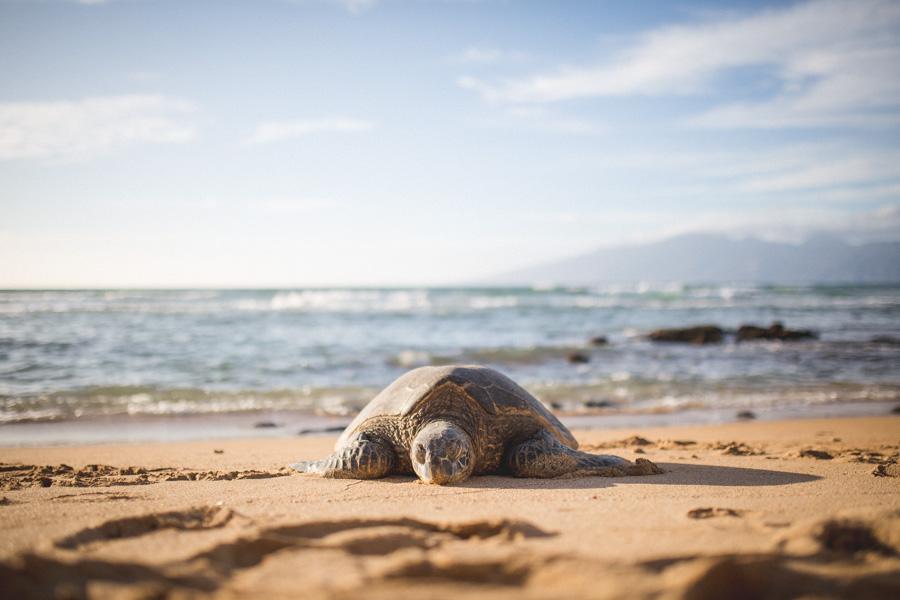 Maui 2014 (16 of 18)