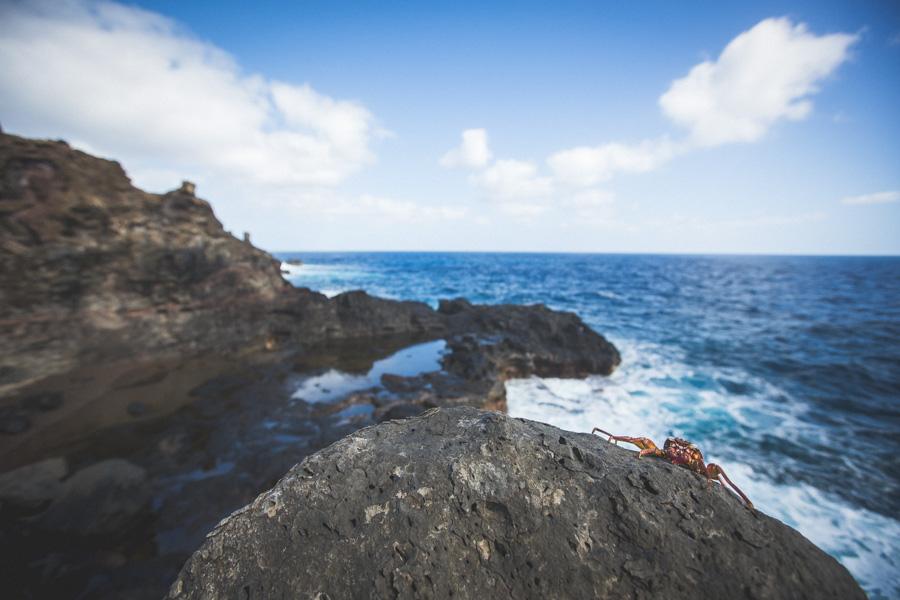 Maui 2014 (4 of 18)